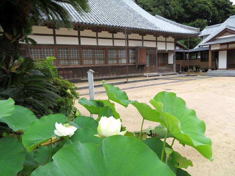 西円寺の青蓮1